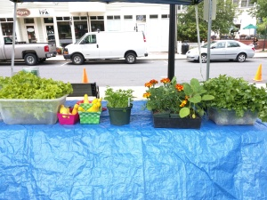 How vibrant are those cilantro bunches!?